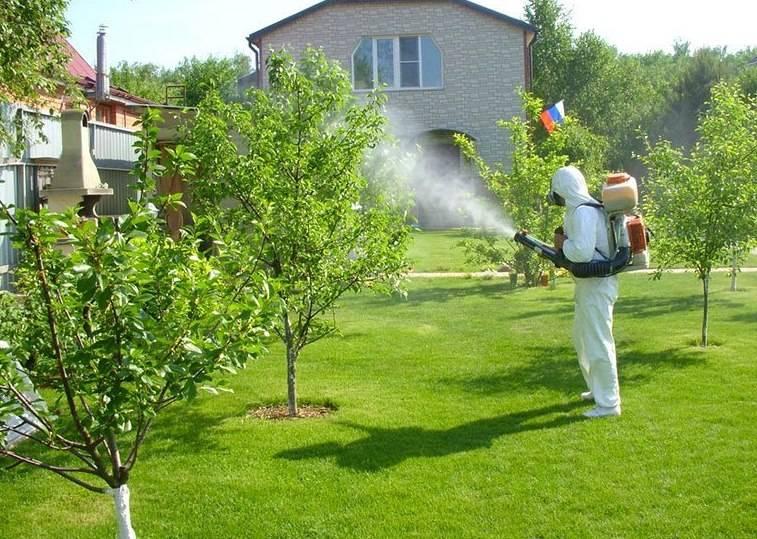 Подкормка яблонь осенью удобрениями: делаем все правильно