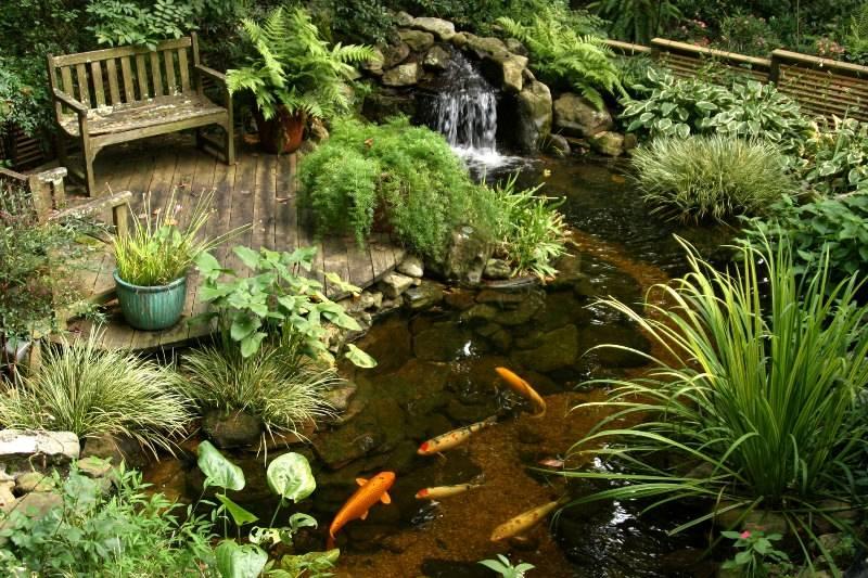 Растения для пруда на даче: названия, виды, особенности, совместимость, фото