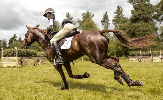 Галоп: как учить лошадь галопу? как поднять ее в галоп? описание видов лошадиного галопа