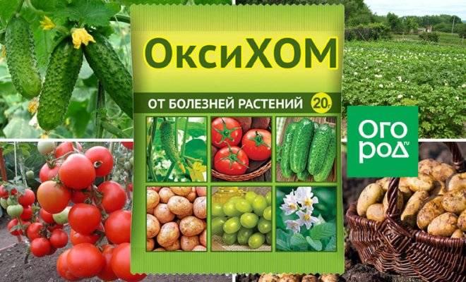 Инструкция по применению оксихома для обработки растений, видео