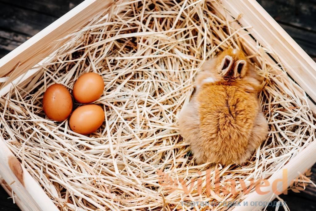 Почему крольчиха не делает гнездо и не рвет пух при окроле?