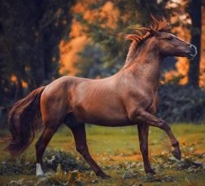 Что вы знаете об опасности болезни лошадей для человека?