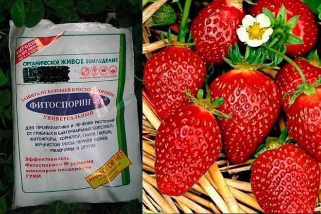 """Препарат для обработки растений """"оксихом"""": инструкция и отзывы"""