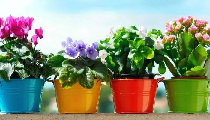 «уход за комнатными растениями». конспект занятия с детьми дошкольного возраста