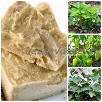 Удобрение из дрожжей для огорода, как приготовить дрожжи для растений?