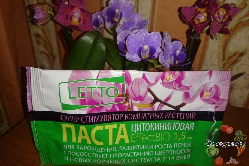 Когда и как подкармливать орхидею фаленопсис? какие удобрения выбрать?