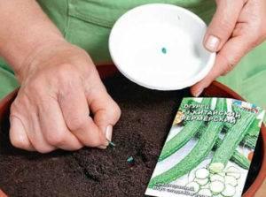 Как вырастить рассаду огурцов в домашних условиях пошаговая инструкция фото видео