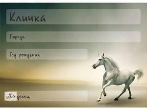 Клички и имена для лошадей: как можно назвать жеребенка, коня и кобылу