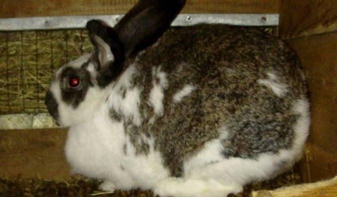 Защита или нападение: почему кролик кусается