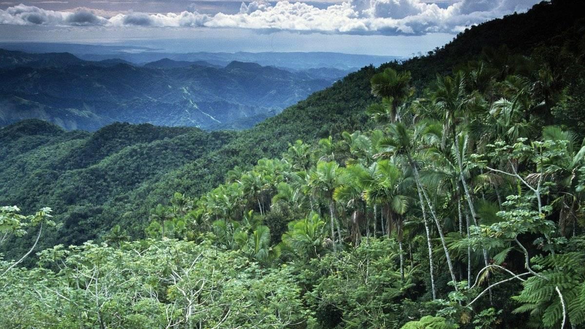 Орхидеи в природе: как и где растут в естественных условиях на деревьях в тропических странах, место обитания в живой и дикой среде, а также фото и видео о приспособленности к произрастанию в естественной среде