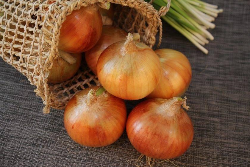 Сорта лука: описание лука-севка, сладкого, красный и бессоновского