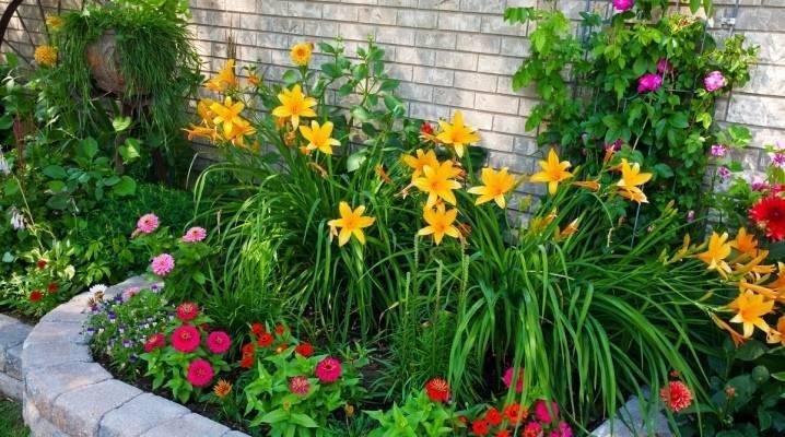 Обзор самых неприхотливых долгоцветущих многолетников для дачи и сада с фото - огород, сад, балкон - медиаплатформа миртесен