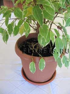 Как и когда пересаживать комнатные растения осенью? пересадка в сентябре домашних цветов, сроки и правила