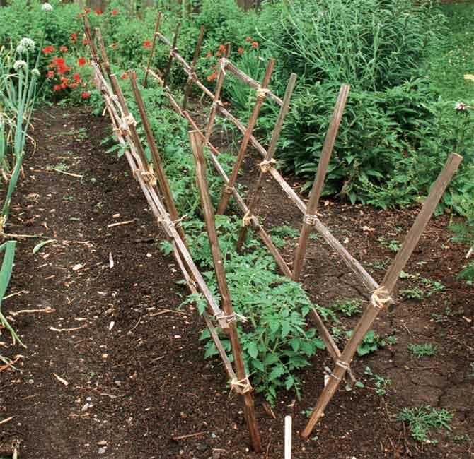 Как подвязать помидоры в открытом грунте фото