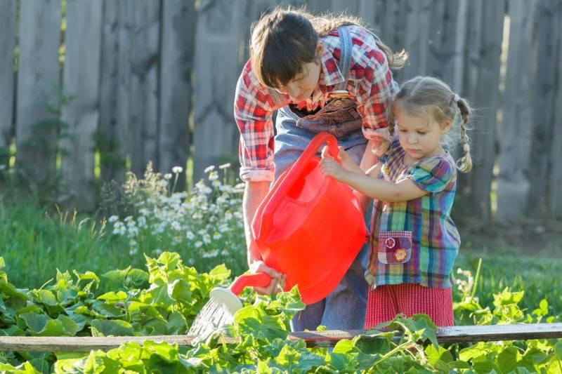 Подкормка огурцов народными средствами в теплице и открытом грунте