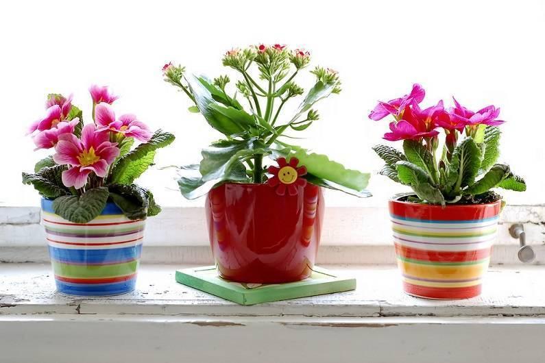 Самые красивые комнатные растения (фото и названия), домашние цветущие растения и цветы в горшках для дома