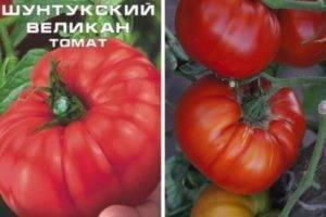 Описание томата подарок женщине, выращивание и уход за гибридом
