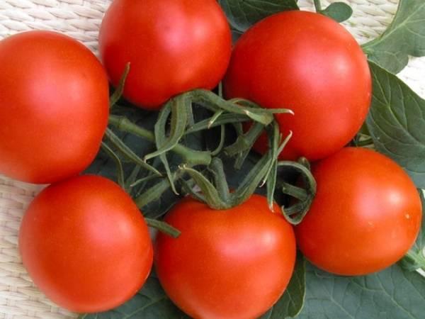 Томат «верлиока». отзывы. фото. урожайность