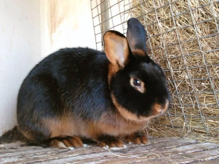 Породы кроликов: названия и фото (каталог)