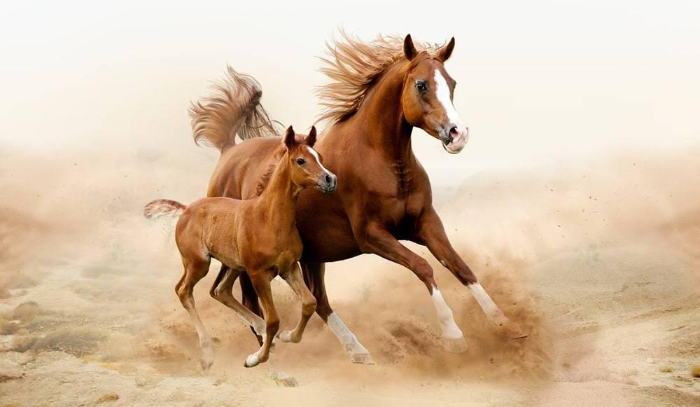Топ-10 самых интересных фактов о лошадях и об их жизни с видео и фото