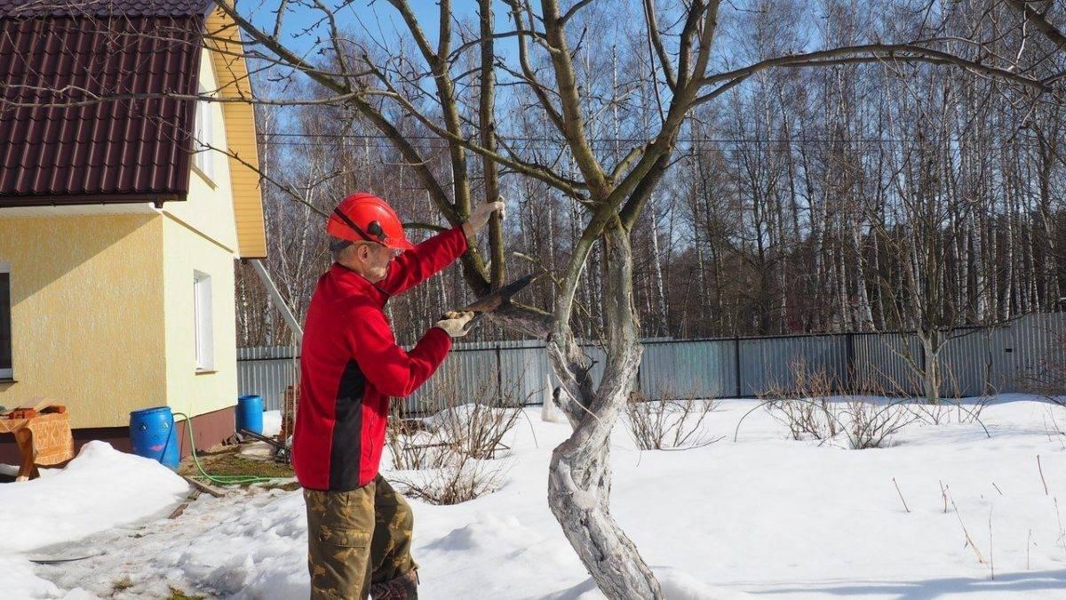 Как привить яблоню на дичку: пошаговое руководство для начинающих садоводов