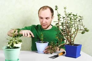 Когда пересаживать розы на другое место? основные правила и советы - sadovnikam.ru