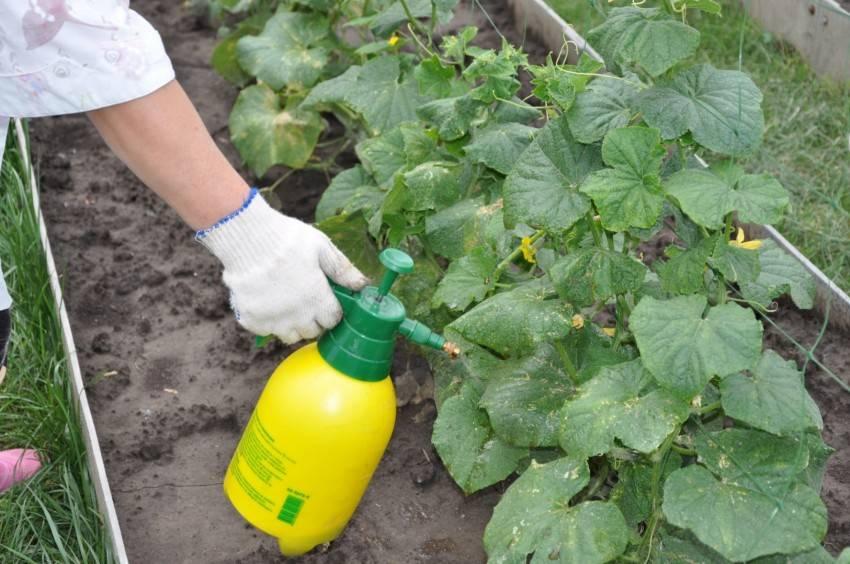Удобрение нитроаммофоска - применение на огороде, для чего она нужна?