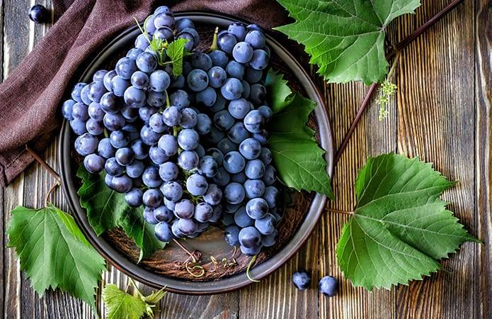 Уникальный виноград с ягодами необычайного размера — сорт фурор
