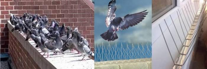 Чем можно отпугнуть и как избавиться от голубей на своем балконе и подоконнике