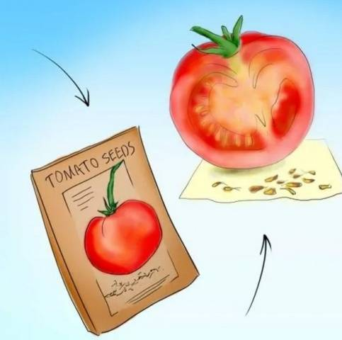 Подготовка семян томатов к посеву на рассаду в домашних условиях: какая обработка лучшая для зёрен помидоров и как правильно собрать материал? русский фермер