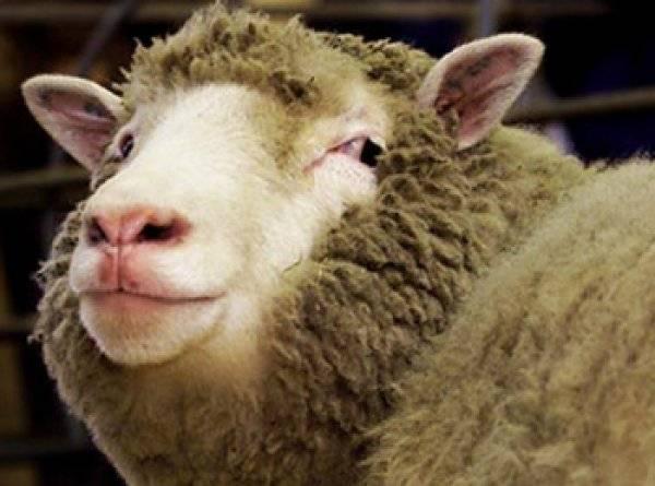 Рейтинг лучших машинок для стрижки овец в 2021 году