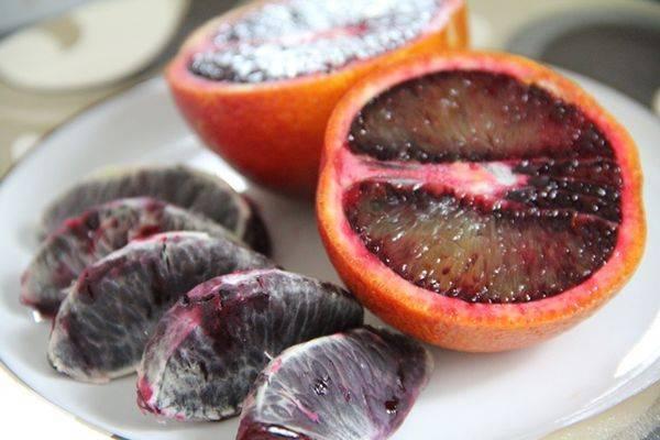 Растение мандарин: описание, как вырастить комнатное дерево в домашних условиях, польза плодов мандарина