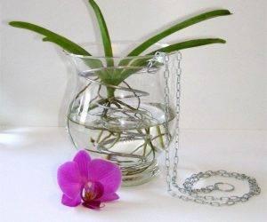 Посадка орхидеи в закрытую систему: субстрат, полив, удобрение. плюсы и минусы метода.