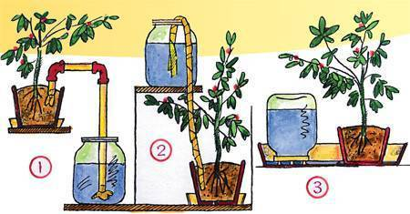 Как сделать автополив комнатных растений своими руками