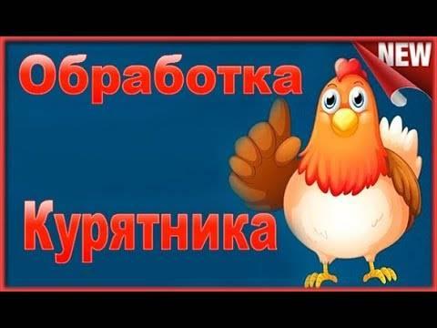 Как вывести куриных вшей: обработка курятника и птицы, профилактические мероприятия