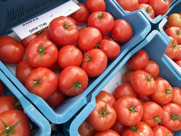 Томат биг биф f1 - описание сорта гибрида, характеристика, урожайность, отзывы, фото