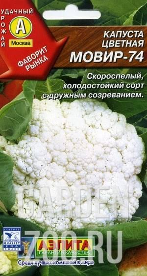 Неприхотливый сорт цветной капусты «альфа»: вся информация об овоще с советами по выращиванию и уходу