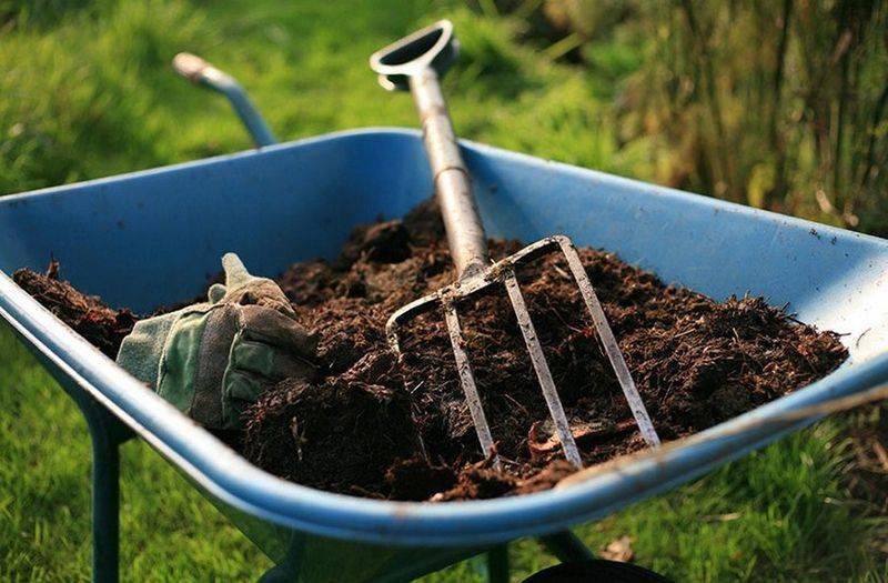 Подкормка яблонь - правильный уход, обработка и опрыскивание
