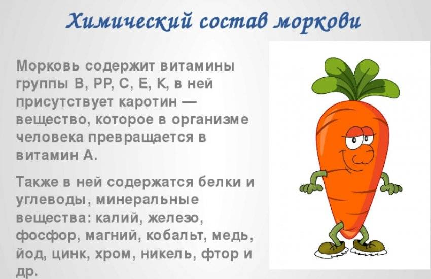 Свойства моркови как овоща и фрукта