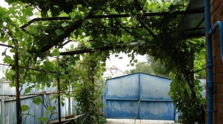 Беседка для винограда (35 фото): виноградная конструкция из металла своими руками