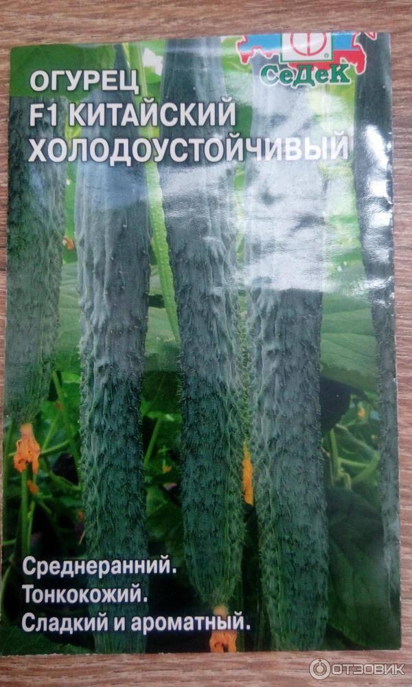 Китайский огурец: описание лучших сортов, посадка, выращивание и уход с фото