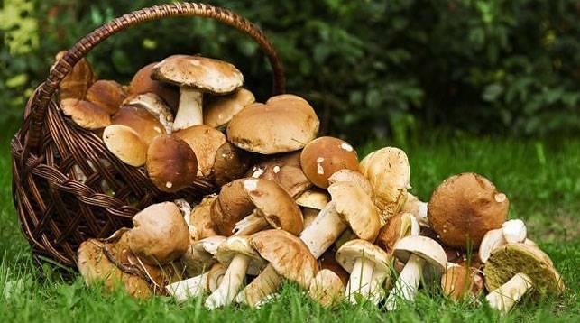 Где можно и где нельзя собирать грибы? vovet.ru