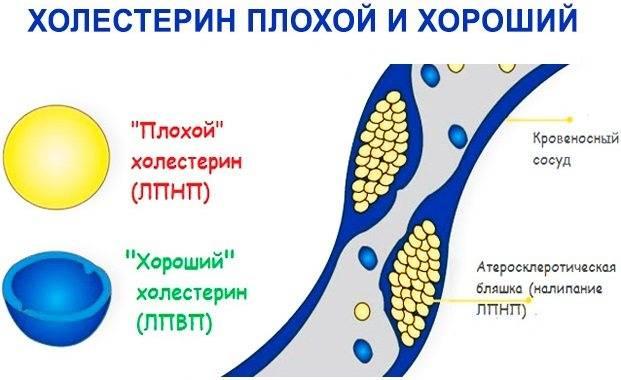 Гусиный жир - польза и вред для организма мужчины и женщины. полезные свойства и противопоказания