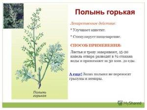 Полыни горькой трава (artenusiae absinthii herba)