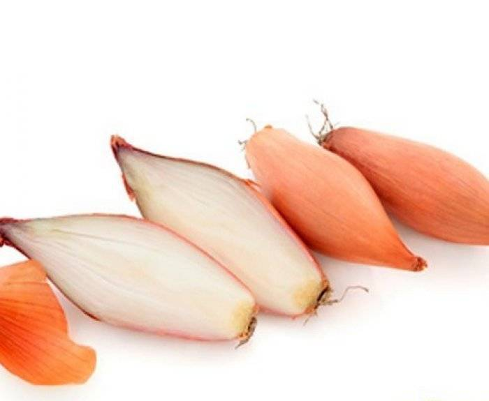 Лук-шалот — отличия от других видов, выращивание, польза и вред на ydoo.info