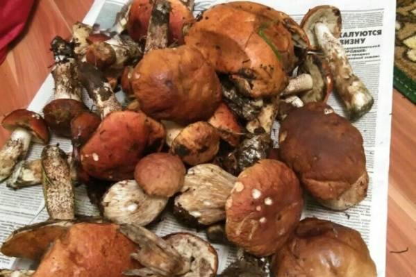 Грибы томской области 2020: когда и где собирать, сезоны и грибные места