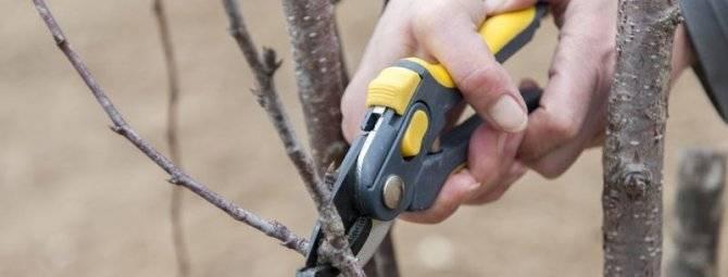 Обрезка вишни осенью: инструкция и схема для начинающих + видео