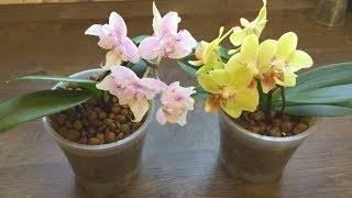 Как омолодить орхидею в домашних условиях: пошаговое фото orhideidoma.ru