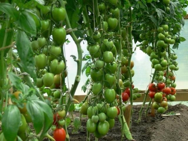 Нитроаммофоска - инструкция по применению, состав и польза для растений