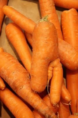 Масло моркови: свойства и применение
